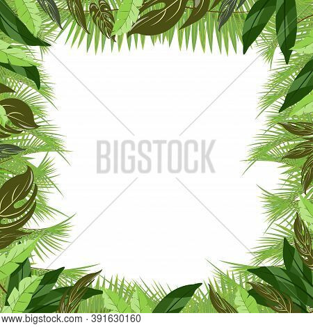 Trendy Tropical Palm And Tropical Plants Leaves Vector Poster. Attractive Summer Tropical Nature Pal