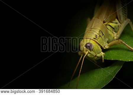 Close up shot of Grasshopper on a plant