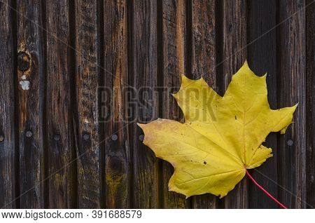 Wooden Multitask Base With Yellow Maple Leaf. Burnt Wooden Laths Nailed Down And  Fallen Leaf With T