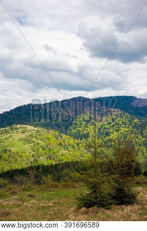 Mountain Landscape In Spring. Cloudy Sky. Tree On The Meadow