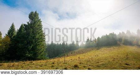 Cold Foggy Morning. Moody Weather Scenery. Spruce Forest On The Grassy Meadow In Autumn. Nature Magi