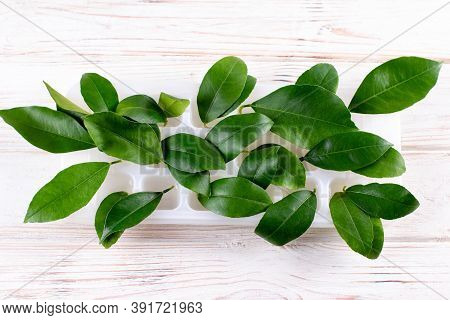 Sprouting Lemon In Water. Lemon Leaves In A Container Of Water. Growing Exotic Plants At Home