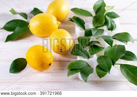 Fresh Lemons On A Table With Lemon Sprouting In A Container Of Water. Growing Exotic Plants At Home.