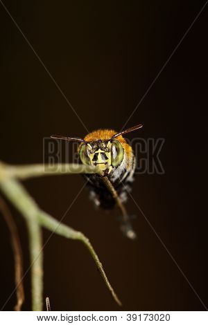 Bees On A Branch.
