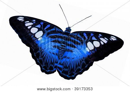 macro photo blue butterfly isolated on white background