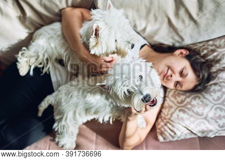 A Pair Of Lovely West Highland White Terrier Are Lying On The Sofa And Hugging Their Owner. Girl Wit
