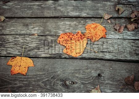 Autumn Orange Leaves On Wooden Background. Fall Vibes