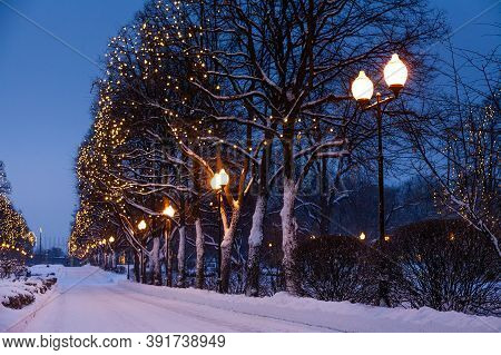 Festive Romantic Fairytale Winter Evening Park Landscape. Snow Covered Trees, Christmas Light Chains