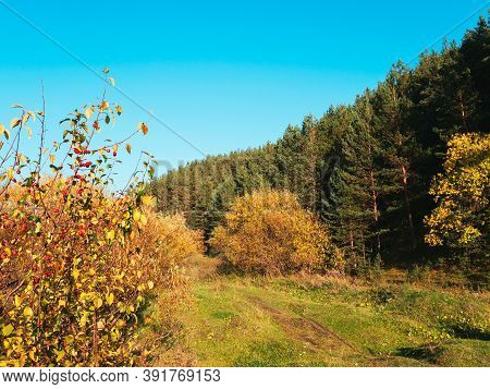 Autumn Rural Road Landscape. Autumn Forest Path Through The Field. Road Track In Rural Areas. Natura
