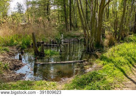 View Of Wild Jungle-like Forests With Watercourses In The Muldental Near Leipzig,saxony,germany
