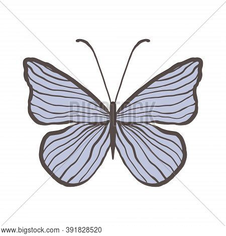 Decorative Vintage Blue Butterfly With Thin Stripes. Graceful Insect On A White Background Isolated.