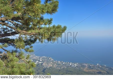 Pine On Cliff With Overlooking The Panorama Of The City, Beach And Black Sea On Background Down. Ai-
