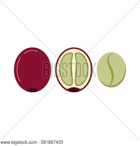 Coffee Berry In Section And Without Skin And Pulp Icon Set Isolated On White Background. Fresh Green