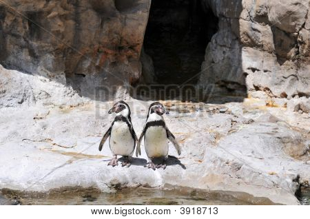 Two Penguins Standing On The Rocks