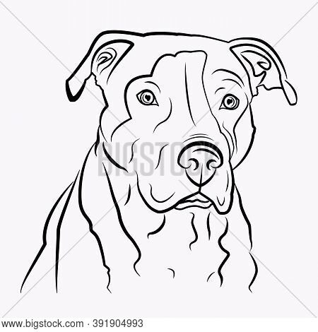 Simple Vector Image Of An American Pit Bull Terrier. Vector Isolated Illustration In Black Color On