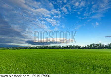 Beautiful White-blue Clouds On The Blue Sky Above The Field With Green Grass, Bright Sunny Day Used