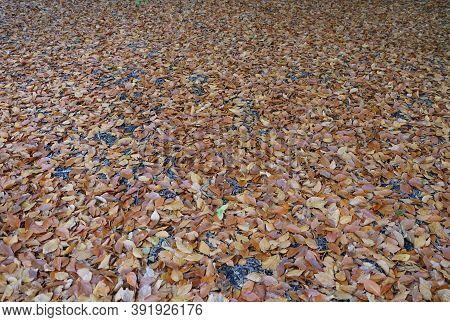 Fallen Dry Leaves On The Ground During Autumn Season