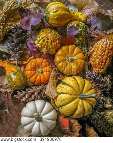A Pumpkin Is A Cultivar Of A Squash Plant, Most Commonly Of Cucurbita Pepo
