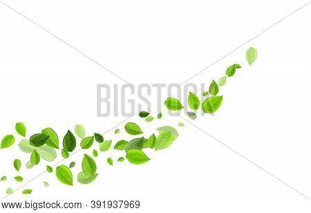 Swamp Greens Transparent Vector Brochure. Tea Foliage Pattern. Olive Leaf Fly Wallpaper. Leaves Fore