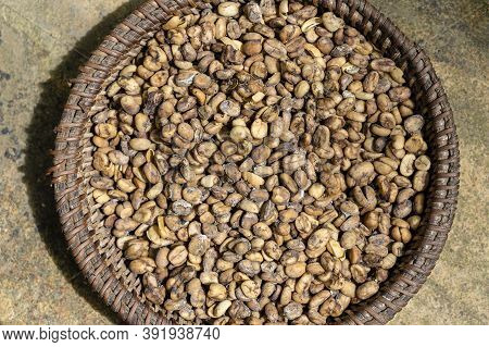 Luwak Coffee, Unclean Coffee Beans, Closeup. Kopi Luwak Is Coffee That Includes Part-digested Coffee