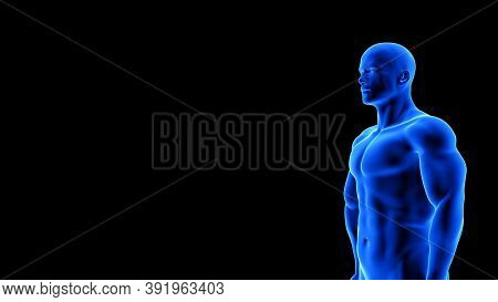 Male Fitness Body - Muscle Mass Building Illustration On Black Background