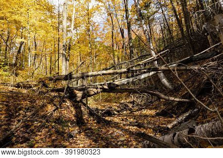 Wild Forest, Untouched Nature With Fallen Trees And Streams With Fallen Leaves In Them