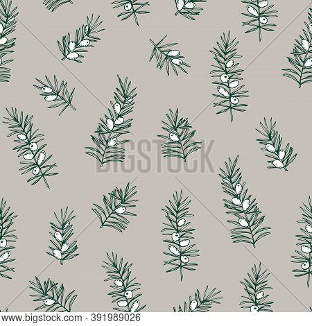 Elegant Hand Drawn Christmas Seamless Pattern. Evergreen Coniferous Taxus Tree Branches. Winter Vint