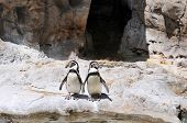 Two penguins standing on the rocks on a horizonta format poster