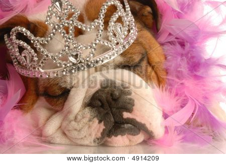 Bulldog Princess