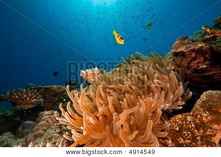 ocean and anemone taken in the red sea. poster