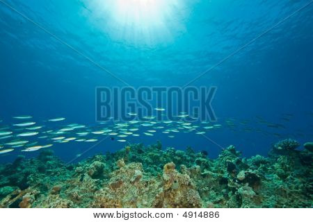 ocean fish and sun taken in the red sea. poster