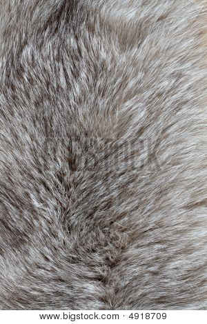 Background with nice gray silver fox fur poster