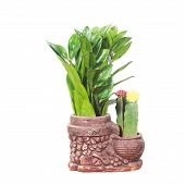 Potted plants isolated in white to the background poster