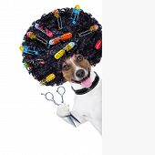 hairdresser scissors dog beside white banner with hair rollers poster