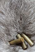 Three cartridges lying on background with nice gray silver fox fur poster
