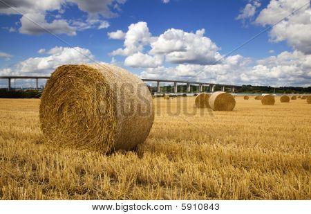 Ipswich Harvest