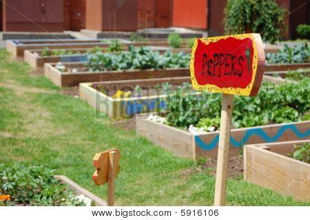 Community Garden Peppers