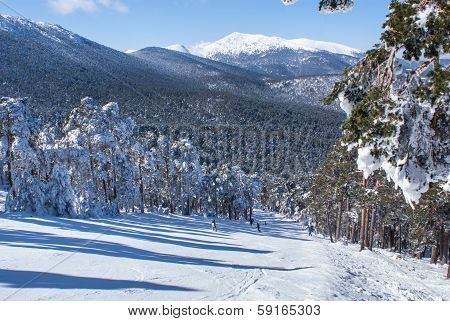 trees in the snow in the area in navacerrada madridspain,Europa