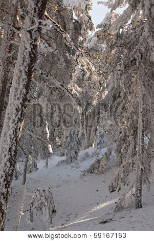 Winter in the mountain navacerrada madrid spain