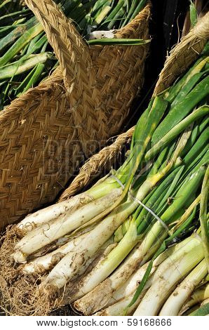 baskets with raw calcots, sweet onions, typical of Catalonia, Spain