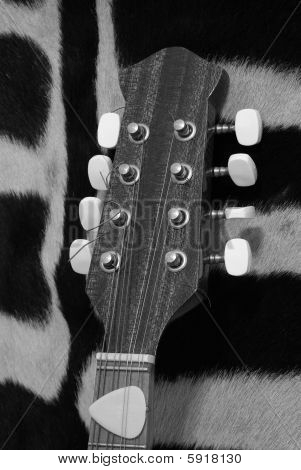 Black and white guitar mandolin headstock