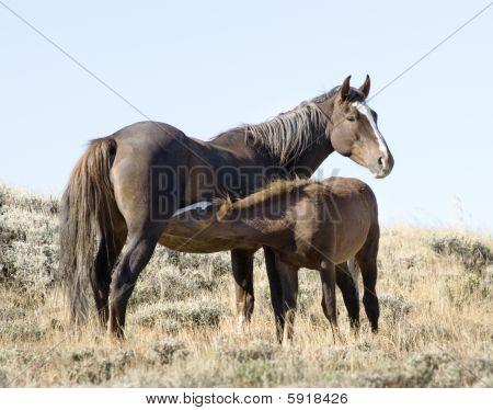 White Mountain Mustangs