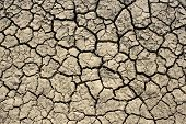 Cracks in the dried soil in arid season as a texture poster