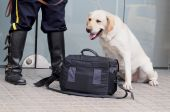 Dog with security guard inspecting a handbag at an entrance of a building. poster