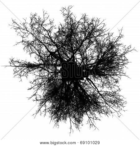 Tree Top Leafless Detailed Silhouette