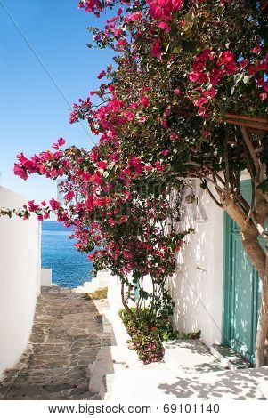 Traditional greek alley on Sifnos island Greece poster
