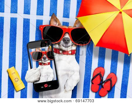 dog taking a selfie while lying on towel being so cute and cool at once sun tanning poster