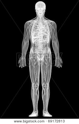 X-ray View Of Full Human Body Isolated On Black