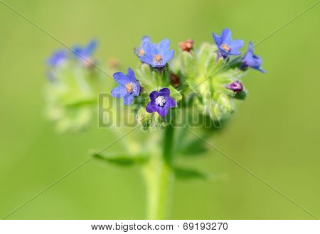 Closeup photo of a beautiful wildflower, detail poster