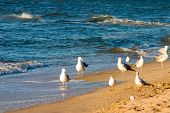 Seagul on beach poster